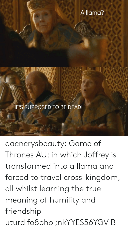 Game of Thrones, True, and Tumblr: A llama?   HE'S SUPPOSED TO BE DEAD! daenerysbeauty: Game of Thrones AU: in which Joffrey is transformed into a llama and forced to travel cross-kingdom, all whilst learning the true meaning of humility and friendship  uturdifo8phoi;nkYYES56YGV B