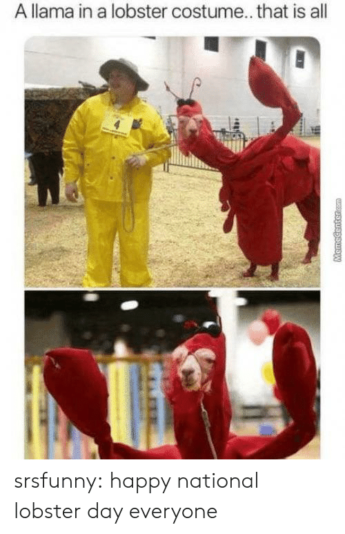 Tumblr, Blog, and Happy: A llama in a lobster costume... that is all  MHR  MemeCentercom srsfunny:  happy national lobster day everyone