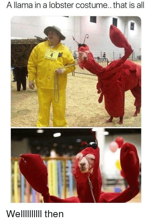 Lobster, All, and Llama: A llama in a lobster costume.. that is all Wellllllllll then