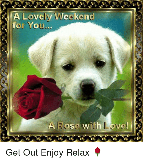love memes and rose a lovely weekend for you a rose with love