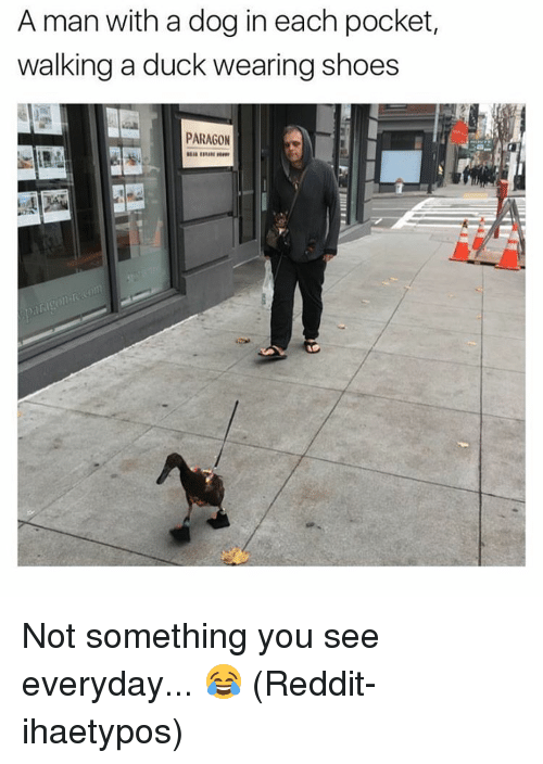 a man with a dog in each pocket walking a 13640493 a man with a dog in each pocket walking a duck wearing shoes,Memes Reddit