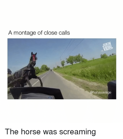 Horse, Montage, and Screaming: A montage of close calls  hahasavage The horse was screaming