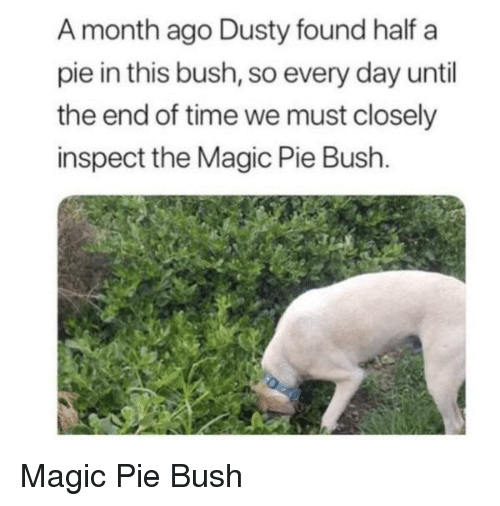 Magic, Time, and Until the End of Time: A month ago Dusty found half a  pie in this bush, so every day until  the end of time we must closely  inspect the Magic Pie Bush. Magic Pie Bush