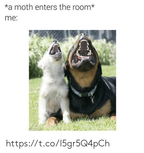 Moth, The Room, and Room: *a moth enters the room*  me: https://t.co/l5gr5Q4pCh