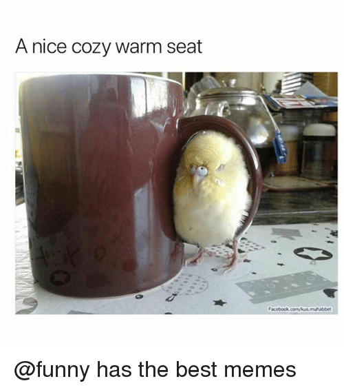 Facebook, Funny, and Memes: A nice cozy warm seat  Facebook.c @funny has the best memes