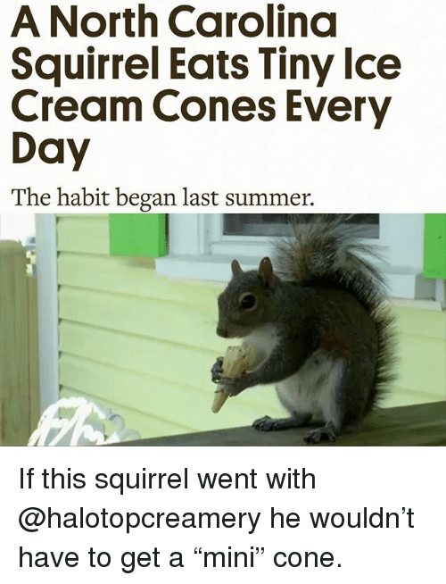 "Funny, Summer, and North Carolina: A North Carolina  Squirrel Eats Tiny lce  Cream Cones Every  Day  The habit began last summer. If this squirrel went with @halotopcreamery he wouldn't have to get a ""mini"" cone."