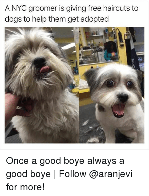 Dogs, Memes, and Free: A NYC groomer is giving free haircuts to  dogs to help them get adopted Once a good boye always a good boye | Follow @aranjevi for more!