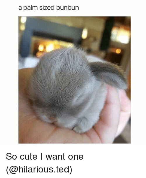 Cute, Funny, and Ted: a palm sized bunbun So cute I want one (@hilarious.ted)