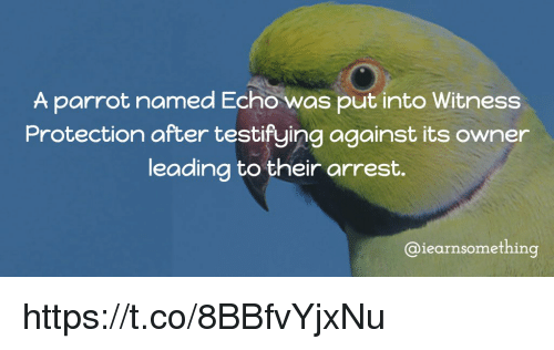 Memes, 🤖, and Echo: A parrot named Echo was put into Witness  Protection after testifying against its owner  leading to their arrest.  @iearnsomething https://t.co/8BBfvYjxNu