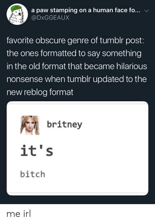 Bitch, Tumblr, and Hilarious: a paw stamping on a human face fo...  @DxGGEAUX  favorite obscure genre of tumblr post:  the ones formatted to say something  in the old format that became hilarious  nonsense when tumolr updated to the  new reblog format  britney  it's  bitch me irl