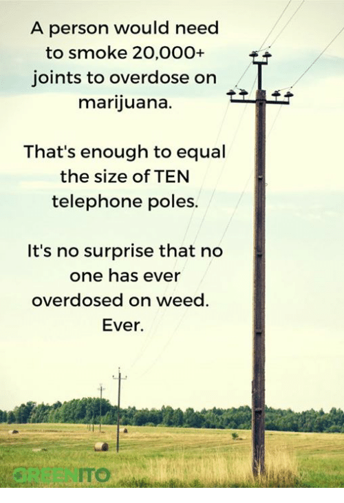 A Person Would Need To Smoke 20000 Joints To Overdose On Marijuana