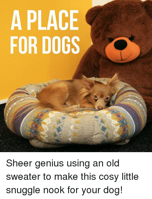 Dogs, Memes, and Genius: A PLACE  FOR DOGS Sheer genius using an old sweater to make this cosy little snuggle nook for your dog!