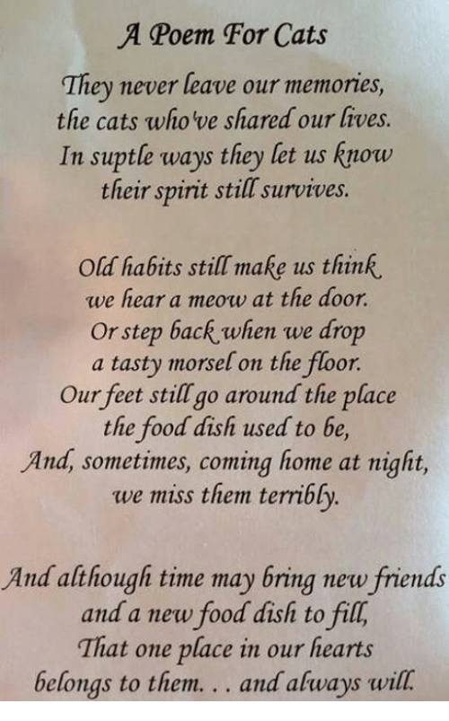 a poem for cats they never leave our memories the cats who ve shared