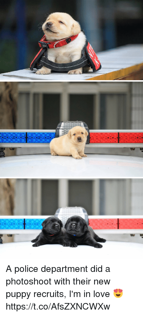 Love, Police, and Puppy: A police department did a photoshoot with their new puppy recruits, I'm in love 😍 https://t.co/AfsZXNCWXw