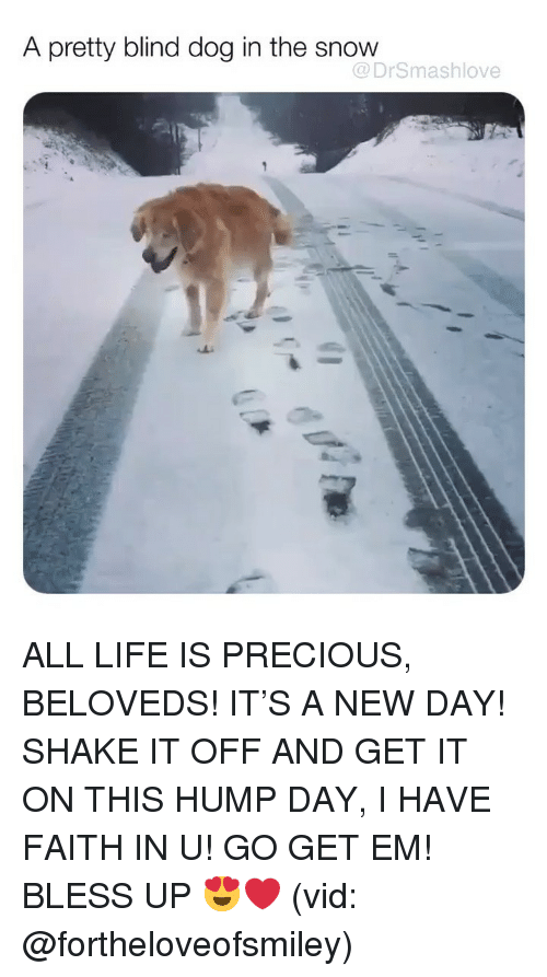 Bless Up, Hump Day, and Life: A pretty blind dog in the snow  @DrSmashlove ALL LIFE IS PRECIOUS, BELOVEDS! IT'S A NEW DAY! SHAKE IT OFF AND GET IT ON THIS HUMP DAY, I HAVE FAITH IN U! GO GET EM! BLESS UP 😍❤️ (vid: @fortheloveofsmiley)