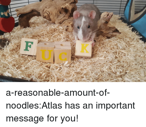 Tumblr, Blog, and Com: a-reasonable-amount-of-noodles:Atlas has an important message for you!