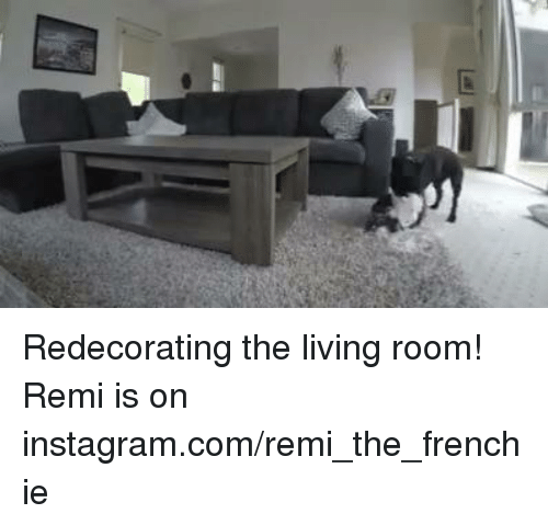 A Redecorating The Living Room! Remi Is On