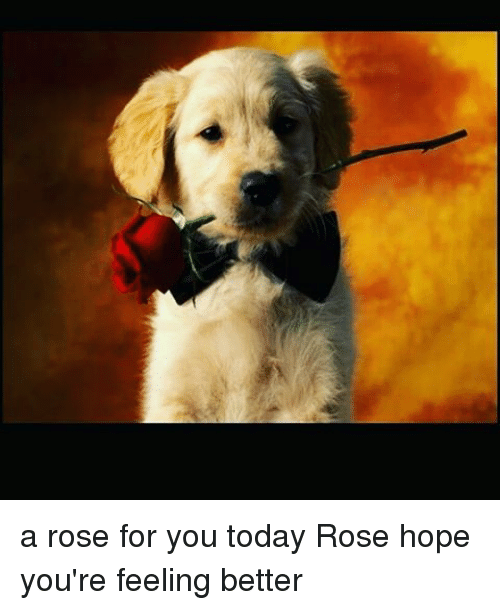 A Rose For You Today Rose Hope Youre Feeling Better Meme On Meme