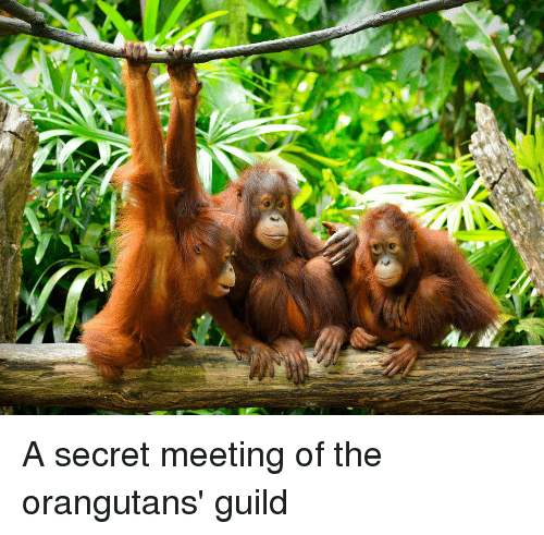 Guild, Secret, and  Meeting