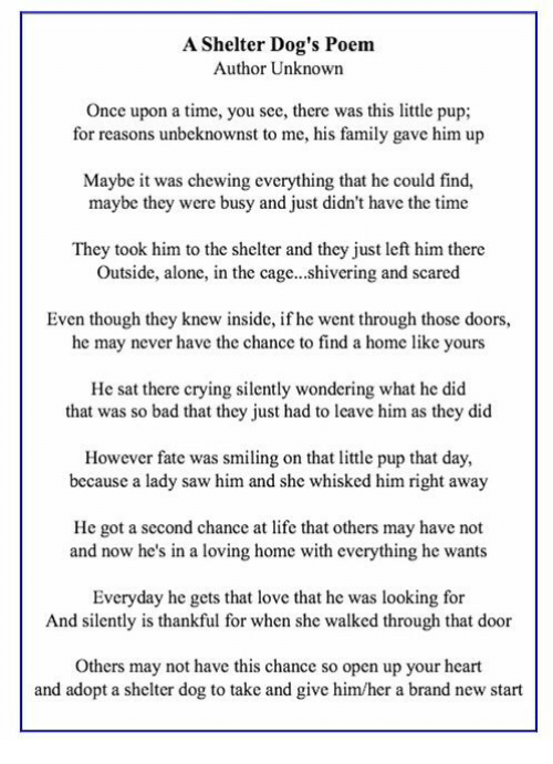 A Shelter Dogs Poem Author Unknown Once Upon A Time You See There