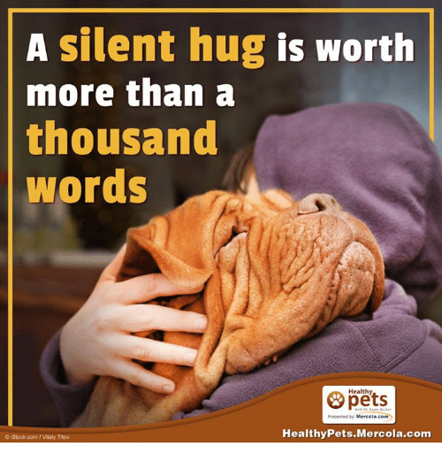 Memes, Istock, and 🤖: A silent hug is worth  more than a  thousand  Words  Healthy  Presented by Mercola.com  Healthy Pets.Mercola.com  o istock com Vitaly Titov