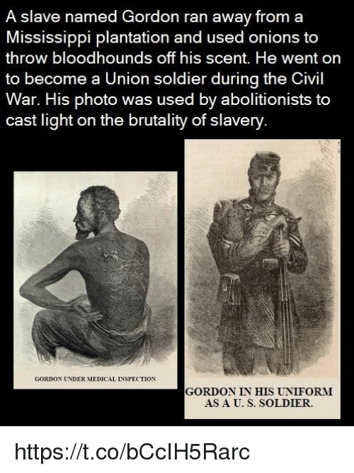 Memes, Civil War, and Mississippi: A slave named Gordon ran away from a  Mississippi plantation and used onions to  throw bloodhounds off his scent. He went on  to become a Union soldier during the Civil  War. His photo was used by abolitionists to  cast light on the brutality of slavery  GORDON UNDER AIEDICAL NSPECTION  GORDON IN HIS UNIFORMI  AS A U. S. SOLDIER. https://t.co/bCcIH5Rarc