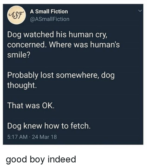 Lost, Good, and How To: A Small Fiction  @ASmallFiction  Dog watched his human cry,  concerned. Where was human's  smile?  Probably lost somewhere, dog  thought.  That was OK.  Dog knew how to fetch.  5:17 AM 24 Mar 18 good boy indeed