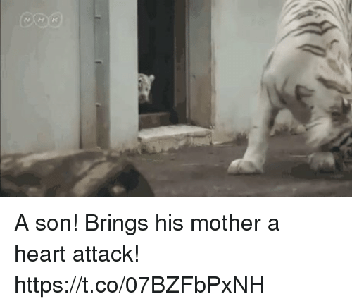 Heart, Heart Attack, and Mother: A son! Brings his mother a heart attack! https://t.co/07BZFbPxNH