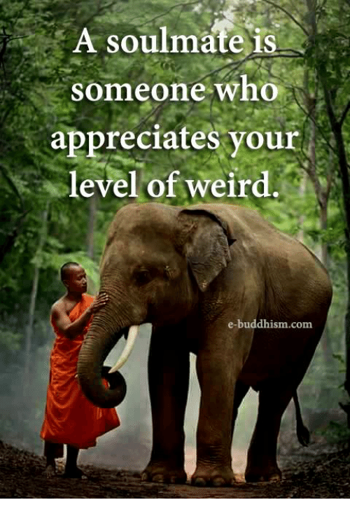 Memes, Weird, and Buddhism: A soulmate is  Someone who  appreciates your  level of weird.  e-buddhism.com