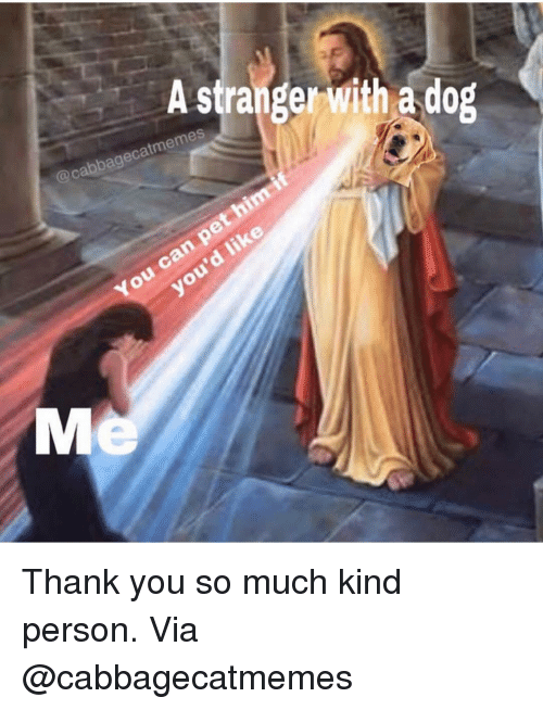 Memes, Thank You, and 🤖: A stranger with a dog  @cabbagecatmemes  can pe  You  d like Thank you so much kind person. Via @cabbagecatmemes