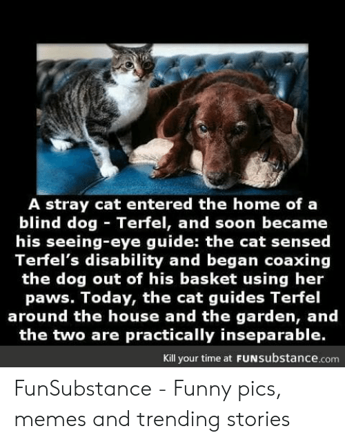 A Stray Cat Entered the Home of a Blind Dog Terfel and Soon Became