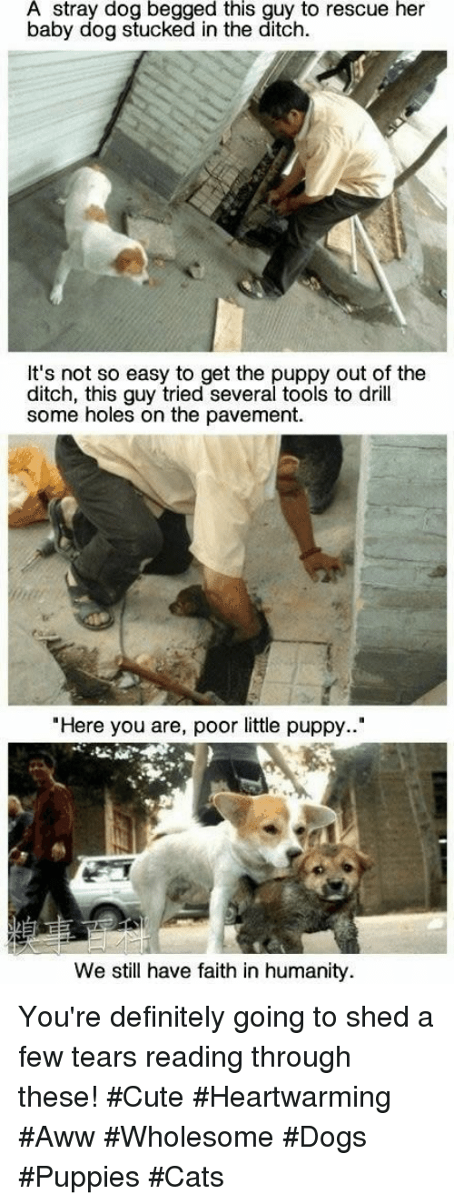 "Aww, Cats, and Cute: A stray dog begged this guy to rescue her  baby dog stucked in the ditch.  It's not so easy to get the puppy out of the  ditch, this guy tried several tools to drill  some holes on the pavement.  ""Here you are, poor little puppy..""  We still have faith in humanity You're definitely going to shed a few tears reading through these! #Cute #Heartwarming #Aww #Wholesome #Dogs #Puppies #Cats"