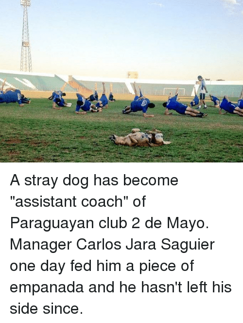 """Club, Coach, and Dog: A stray dog has become """"assistant coach"""" of Paraguayan club 2 de Mayo. Manager Carlos Jara Saguier one day fed him a piece of empanada and he hasn't left his side since."""