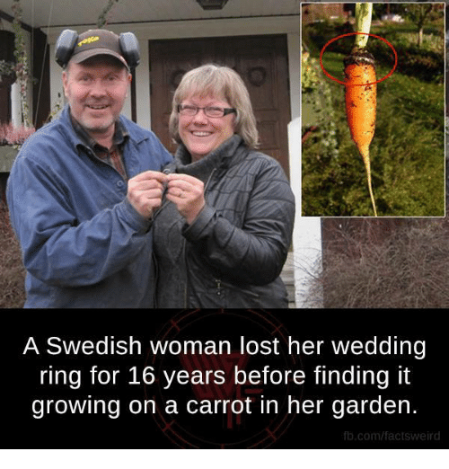 Memes Lost And Fb A Swedish Woman Her Wedding Ring For 16 Years Before Finding It Growing On Carrot In Garden Factsweird