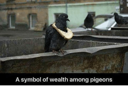 Symbol, Wealth, and  Pigeons: A symbol of wealth among pigeons
