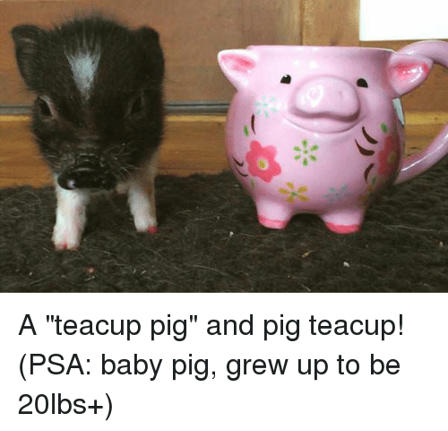 Baby Pig And Psa A Teacup