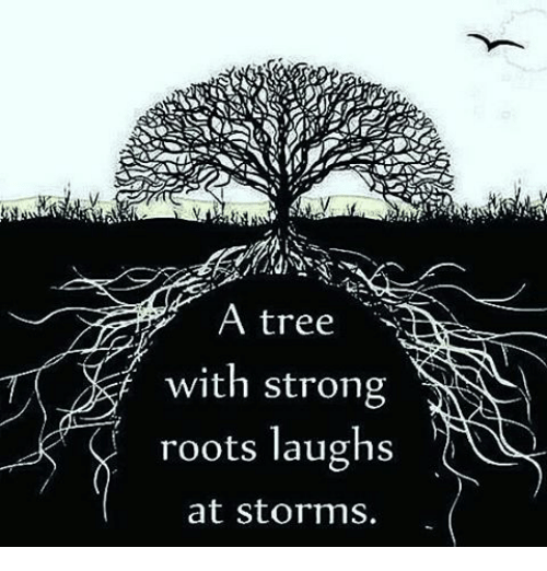 A Tree With Strong Roots Laughs at Storms | Meme on ME.ME