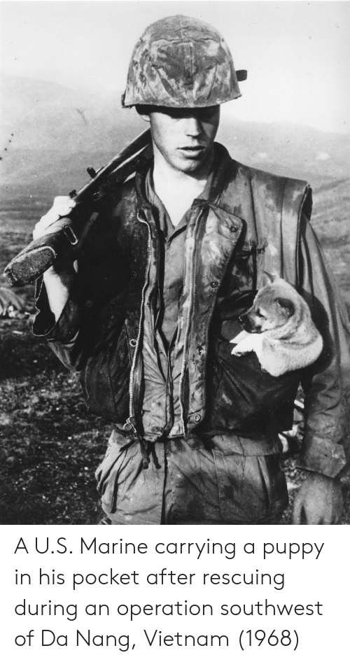 Puppy, Southwest, and Vietnam: A U.S. Marine carrying a puppy in his pocket after rescuing during an operation southwest of Da Nang, Vietnam (1968)