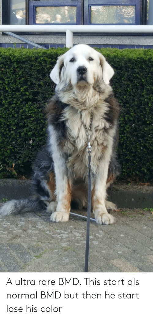 Als, Color, and Rare: A ultra rare BMD. This start als normal BMD but then he start lose his color