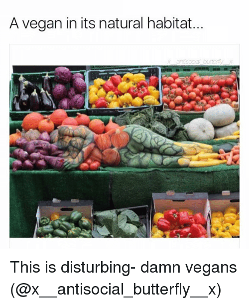 Funny, Butterfly, and Antisocial: A vegan in its natural habitat. This is disturbing- damn vegans (@x__antisocial_butterfly__x)