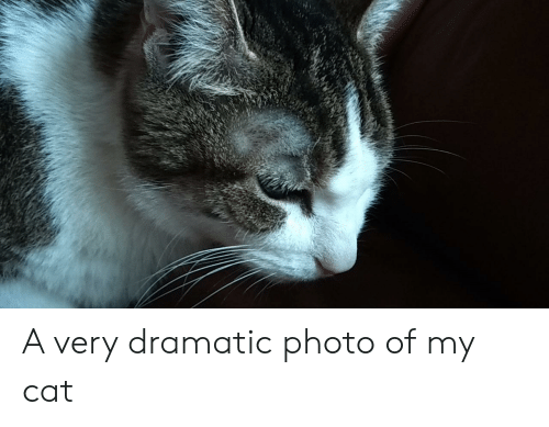 Cat, Photo, and Dramatic: A very dramatic photo of my cat