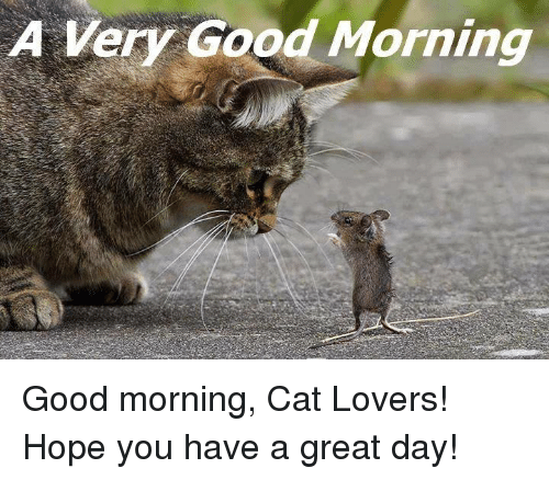 a very good morning good morning cat lovers hope you 14070187 a very good morning good morning cat lovers! hope you have a great