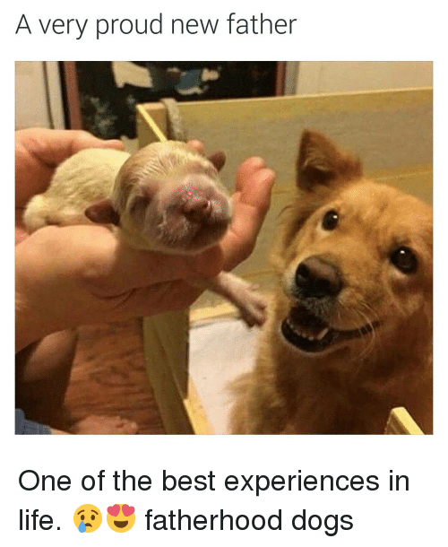a very proud new father one of the best experiences 11706229 a very proud new father one of the best experiences in life,Dank Memes Dog
