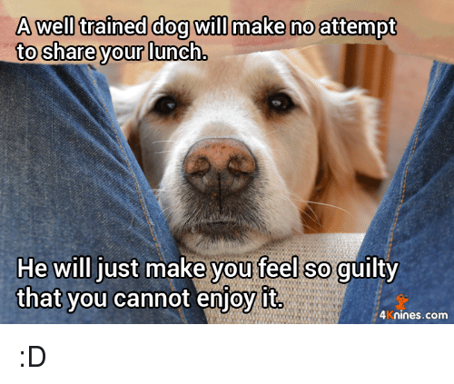 A Well Trained Dog Will Make No Attempt to Shareyour Lunch He Will ...