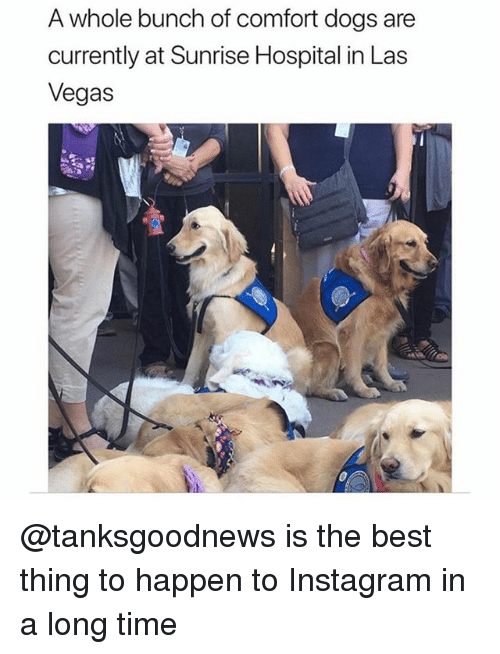 Dogs, Funny, and Instagram: A whole bunch of comfort dogs are  currently at Sunrise Hospital in Las  Vegas @tanksgoodnews is the best thing to happen to Instagram in a long time