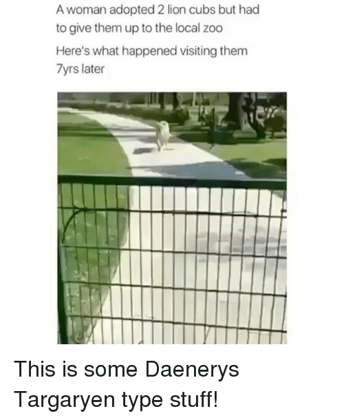 Memes, Daenerys Targaryen, and Cubs: A woman adopted 2 lion cubs but had  to give them up to the local zoo  Here's what happened visiting them  7yrs later This is some Daenerys Targaryen type stuff!