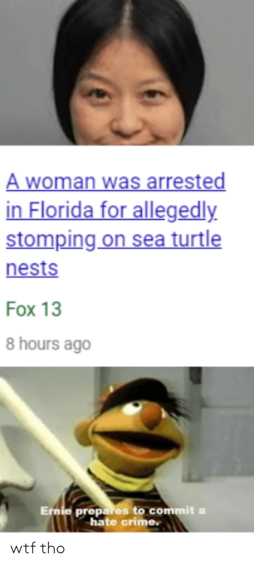 Crime, Wtf, and Florida: A woman was arrested  in Florida for allegedly  stomping on sea turtle  nests  Fox 13  8 hours ago  Ernie prepares to commit a  hate crime. wtf tho