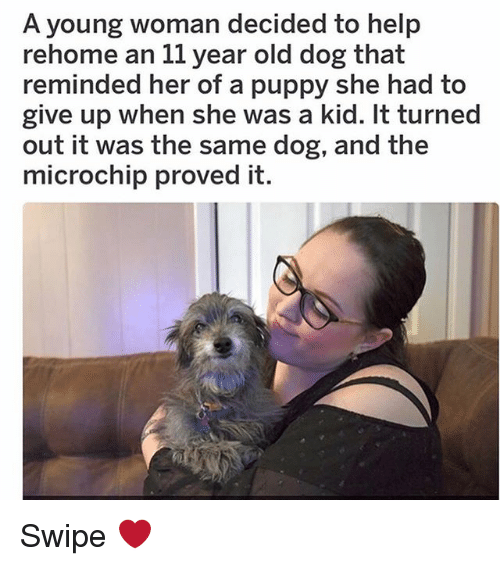 Memes, Help, and Puppy: A young woman decided to help  rehome an 11 year old dog that  reminded her of a puppy she had to  give up when she was a kid. It turned  out it was the same dog, and the  microchip proved it Swipe ❤️