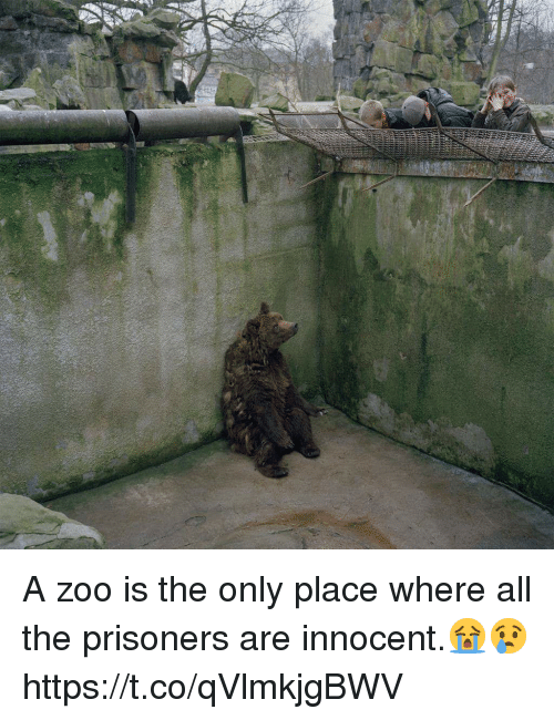 All The, Zoo, and Prisoners: A zoo is the only place where all the prisoners are innocent.😭😢 https://t.co/qVlmkjgBWV
