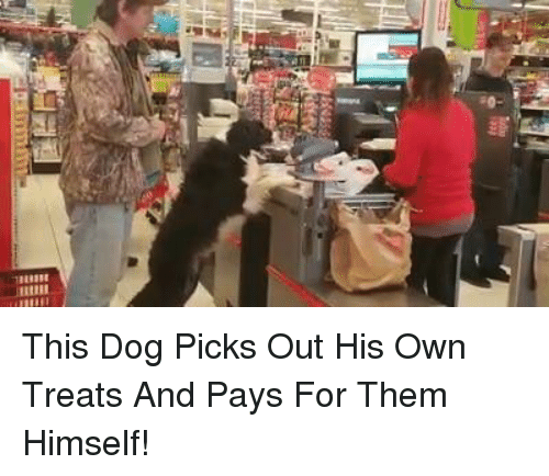 a0 7lllllt this dog picks out his own treats and 14745613 ✅ 25 best memes about dog dog memes,Dog Dad Meme